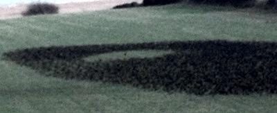 starlings4